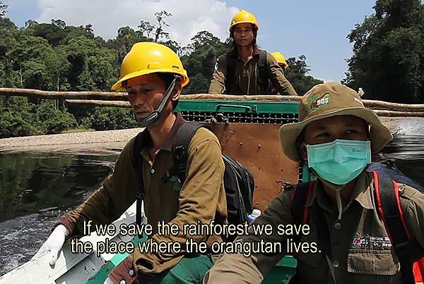 BOSF Third Orangutan Release 2012