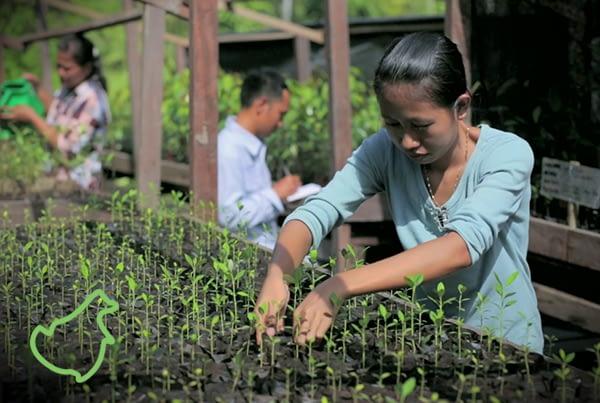 Katingan Peatland Restoration and Conservation Project
