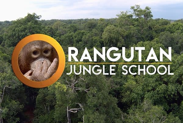 'Orangutan Jungle School'– Series Trailer